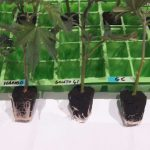 Making the cut – your guide to clipping and rooting cuttings
